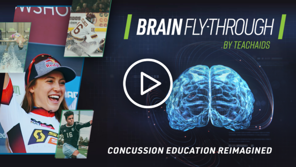 Brain Fly-Through By TeachAids - Concussion Education Re-Imagined - video still with 3D illustration of a brain